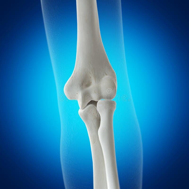 骨骼手肘 皇族释放例证