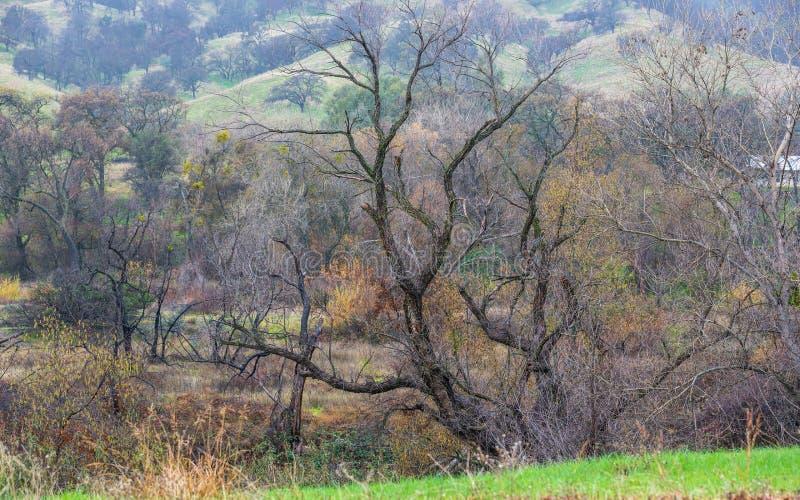 骨骼树以曲折的轰烈的存在 库存照片