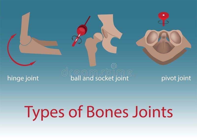 骨头联接 向量例证
