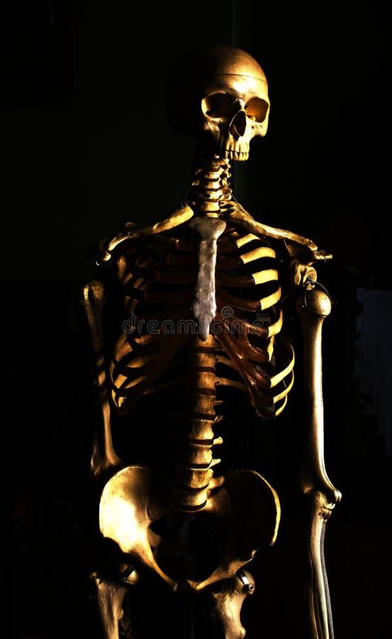 骨头 免版税库存照片