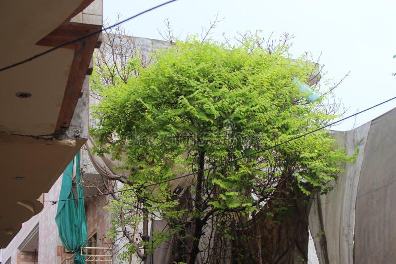 高一个呈绿色树的身分 免版税库存照片