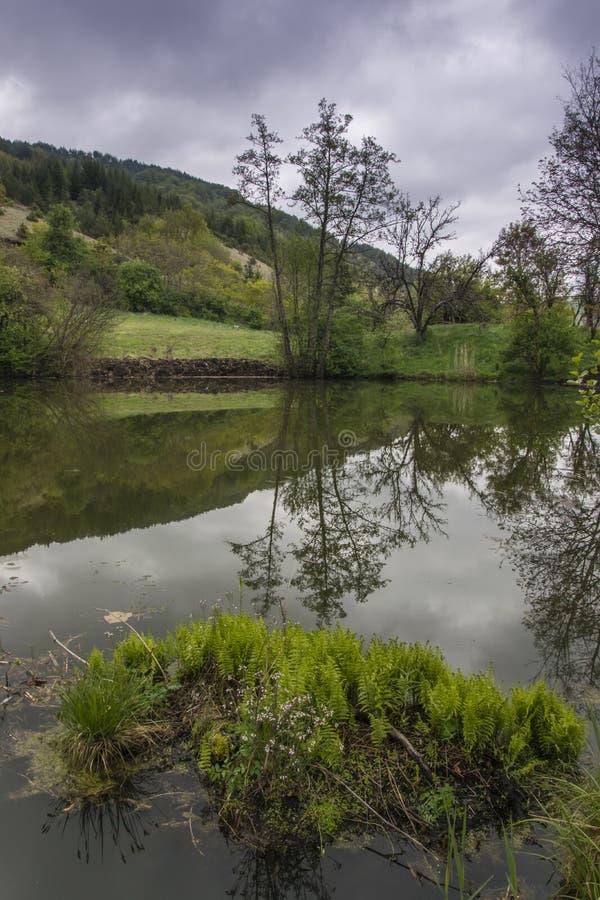 高亭亭玉立的树和它的反射在湖山 库存图片