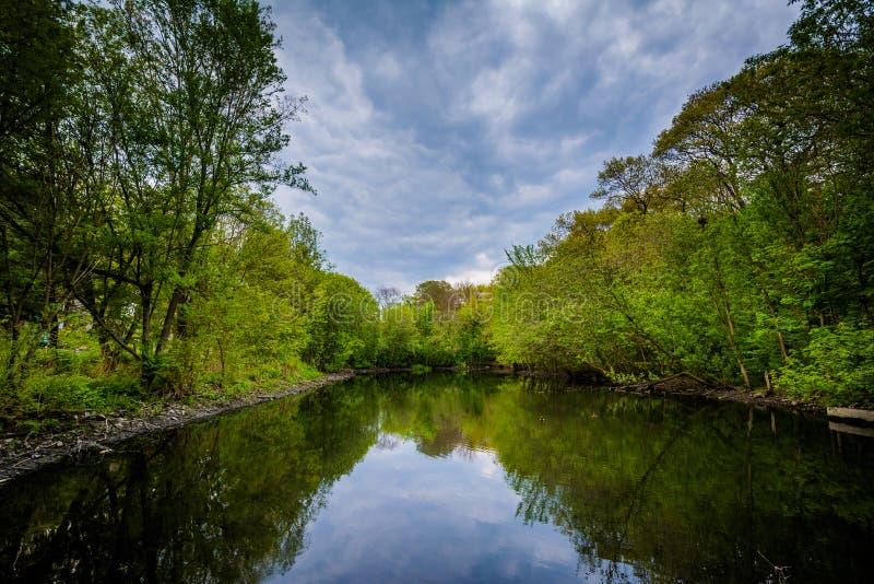 高公园的Wendigo池塘,在多伦多,安大略 免版税库存照片