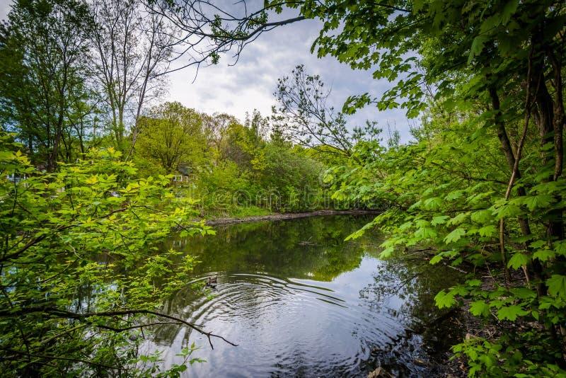 高公园的Wendigo池塘,在多伦多,安大略 库存图片