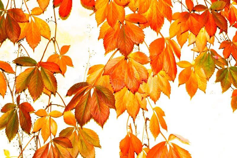 高关键秋天颜色在纳帕,加利福尼亚 库存图片
