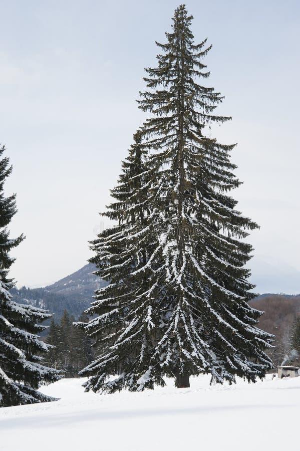 高冬天树 免版税库存图片