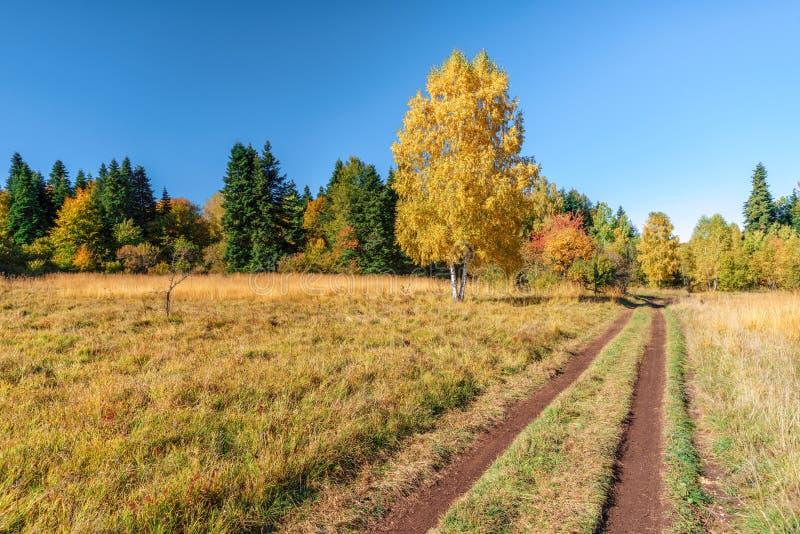 高加索金黄秋天山森林风景晴朗的乡下风景有黄色事假桦树的在沼地和农村车道 免版税库存图片