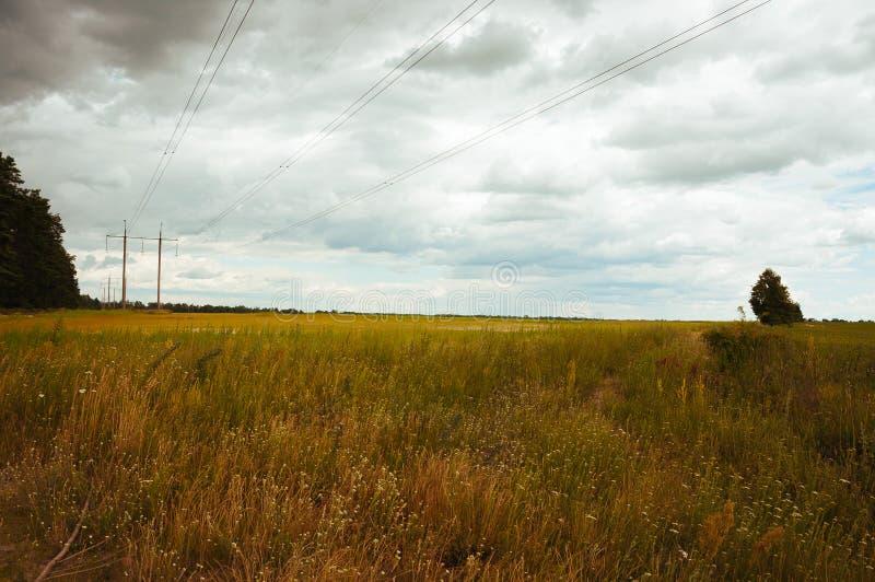 高压定向塔和缆绳在荷兰农业风景与青贮玉米耕种 库存图片