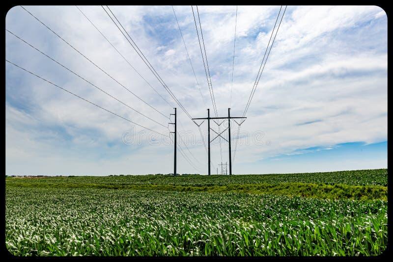 高压/紧张电线通过玉米或玉米农场 库存图片