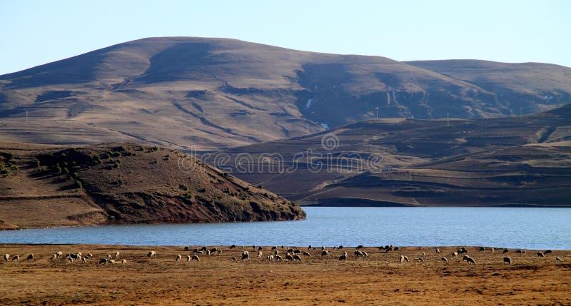 高原的湖 图库摄影