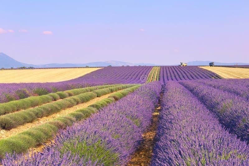 高原Valensole,普罗旺斯:淡紫色领域 库存图片