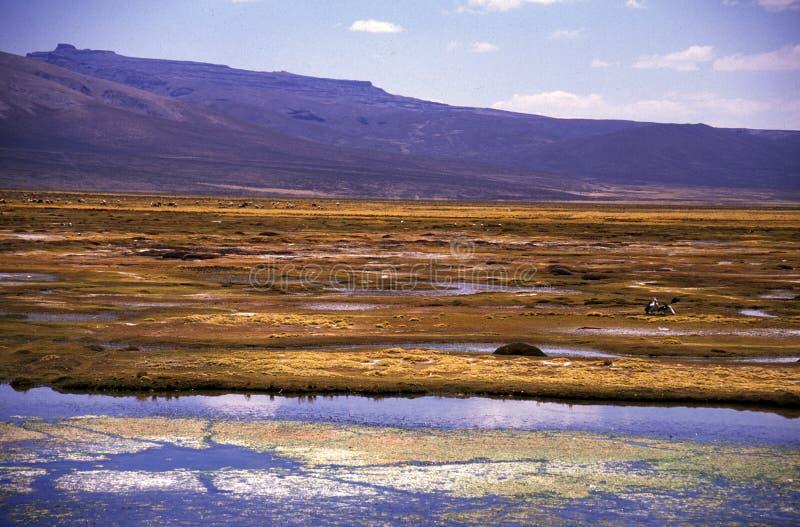 高地横向在秘鲁 免版税库存照片