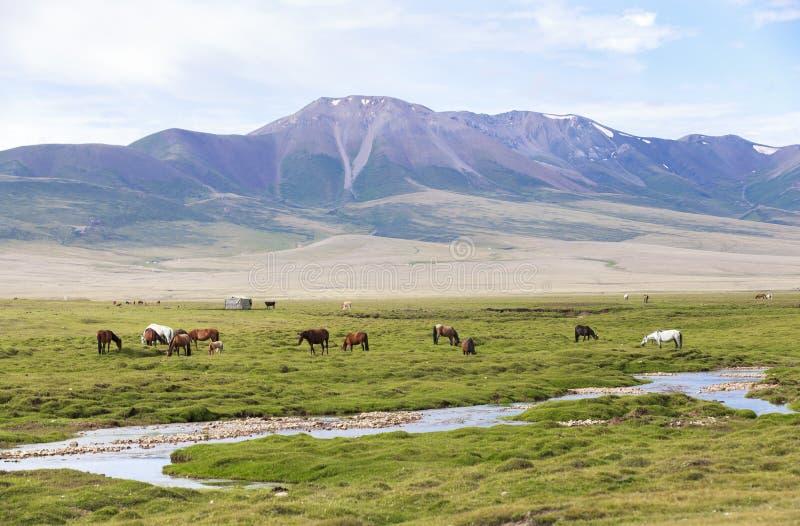 高地生活在吉尔吉斯斯坦 免版税图库摄影