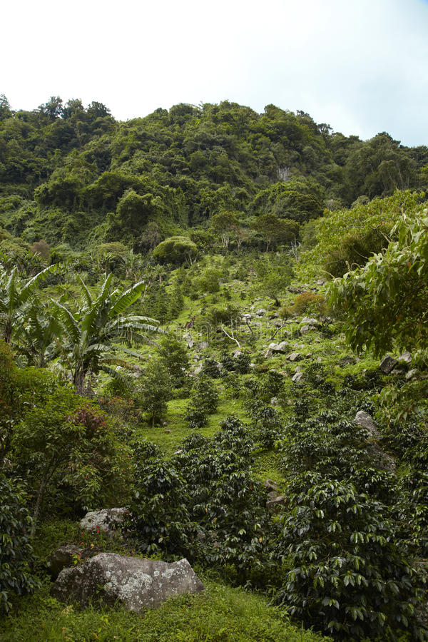 高地, Boquete,奇里基省, Panama4 库存照片