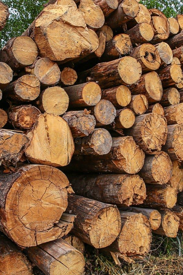 高堆树干老被打碎的大树干的日志末端 免版税库存照片