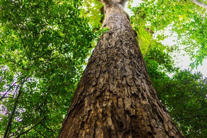 高大的树木在森林里 库存照片