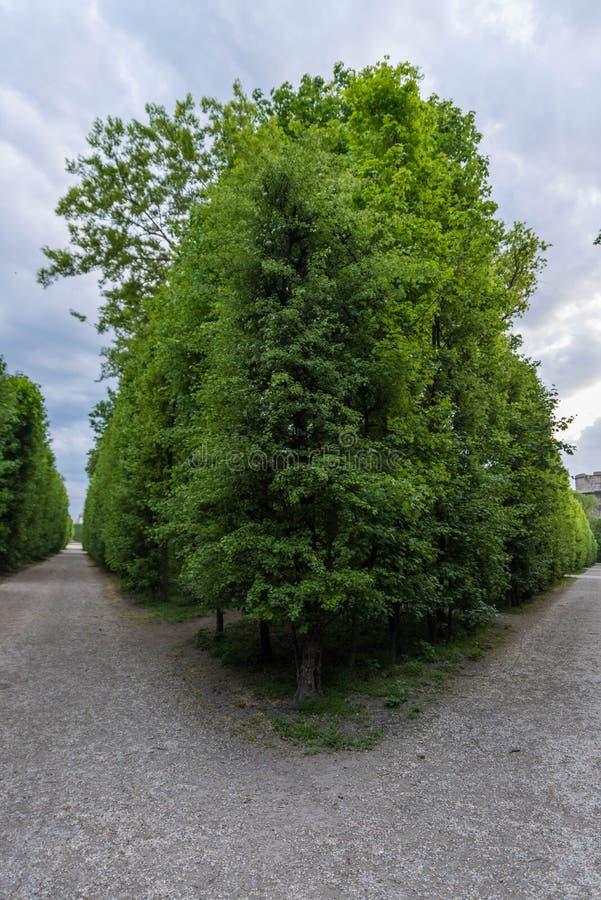高大的树木树篱 库存图片