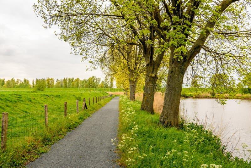 高大的树木行与发芽新年轻绿色的离开