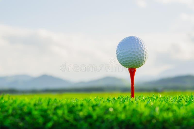 高尔夫球在准备好发球区域的钉使用和在绿草在自然背景中 库存图片
