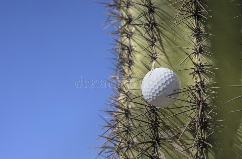高尔夫球在仙人掌树黏附了在狂放的摇摆以后 库存图片