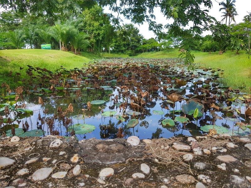高尔夫球场在万象,老挝 免版税图库摄影