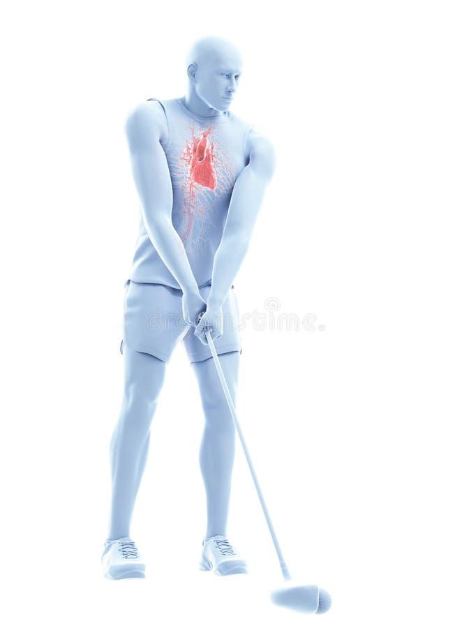 高尔夫球运动员的心脏 皇族释放例证