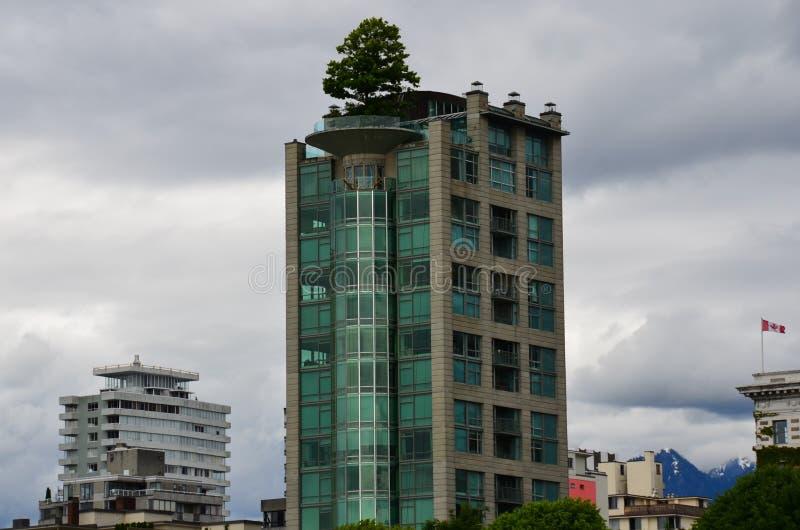 高层树,温哥华,不列颠哥伦比亚省,加拿大 免版税库存照片
