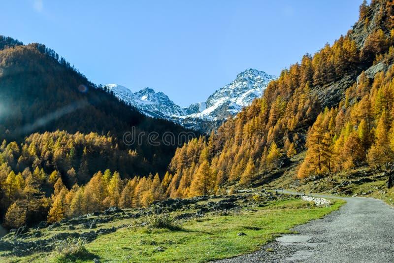 高山全景在有蓝天的山森林和在秋天期间的红色树里 免版税图库摄影