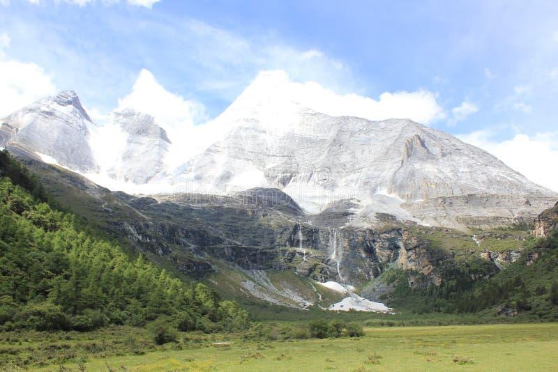 高山冰川和草原 库存图片