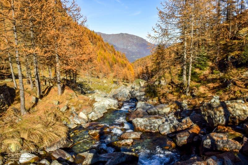 高山小河在有岩石、蓝天和红色树的山森林里在秋天期间 免版税图库摄影