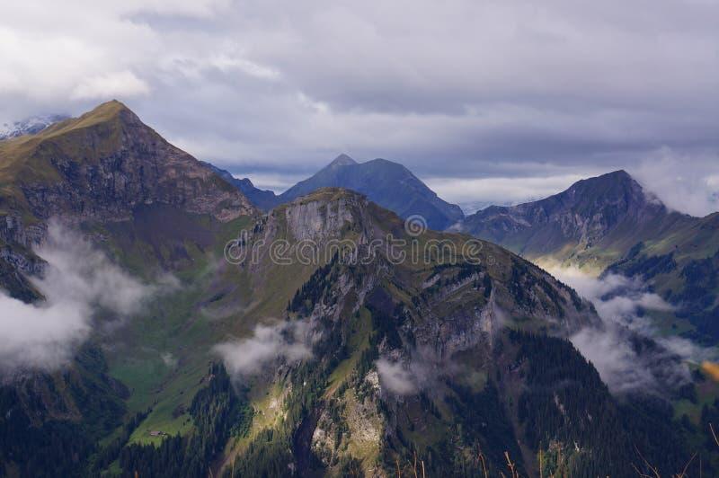 高山森林、湖布里恩茨,山脉和薄雾惊人的看法在Schynige普拉特,瑞士 一部分的 免版税库存图片