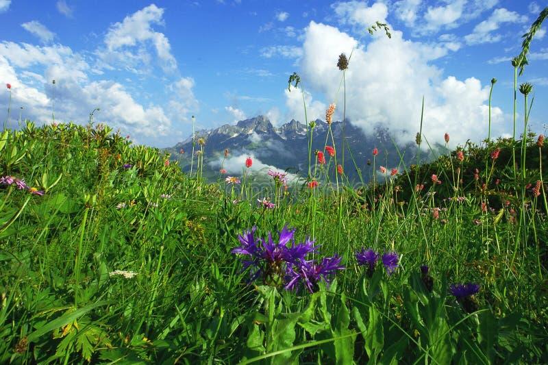 高山草甸和山花在遥远的山背景在一朵美丽的云彩 免版税库存照片