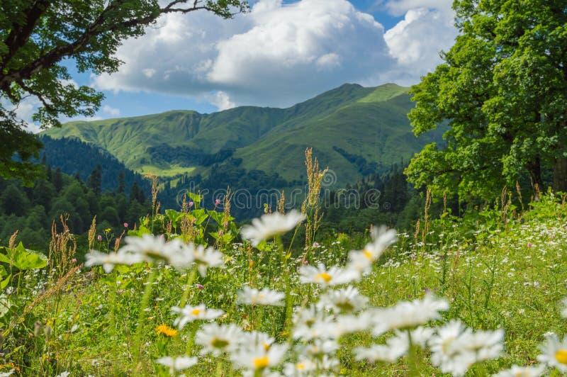 高山草甸美丽的景色高加索山脉的 免版税库存图片