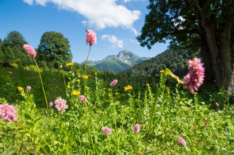 高山草甸美丽的景色高加索山脉的 库存照片