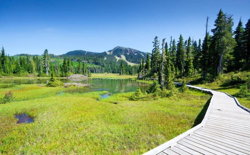 高山足迹和草甸, Strathcona省公园,温哥华岛,不列颠哥伦比亚省,加拿大 免版税库存图片