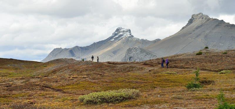 高山足迹的远足者在沿Icefields大路的加拿大罗基斯在班夫和碧玉之间 免版税库存照片