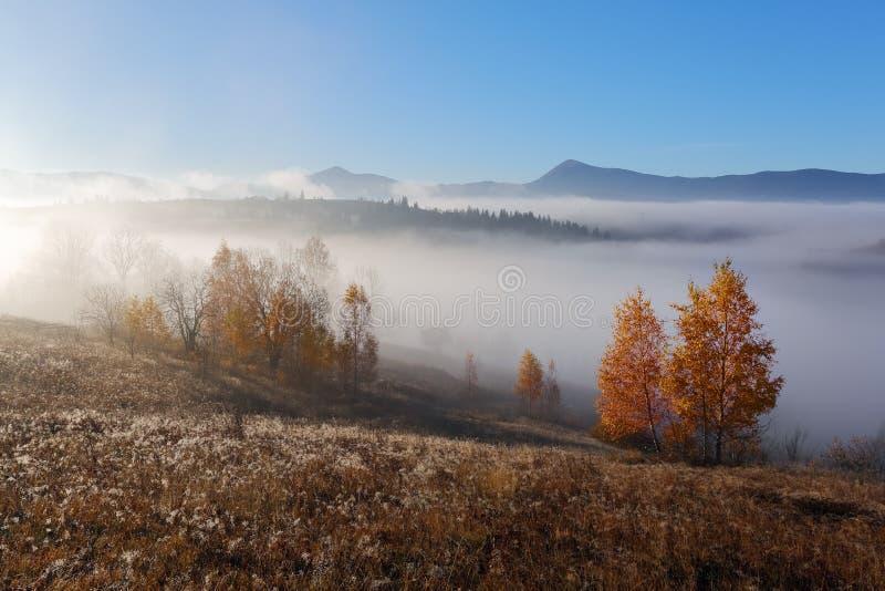 高山,桔黄色树,雾秋天风景  太阳光芒启迪有干草的草坪 蓝天 图库摄影