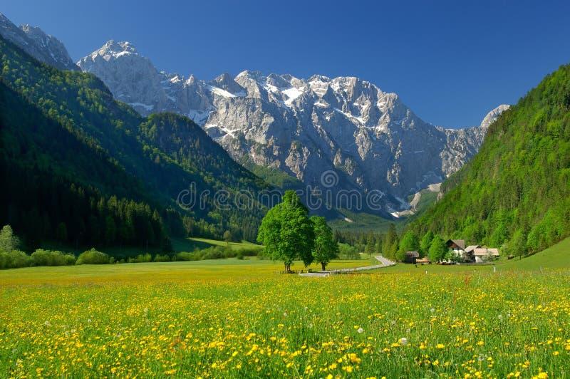 高山Spring Valley 图库摄影