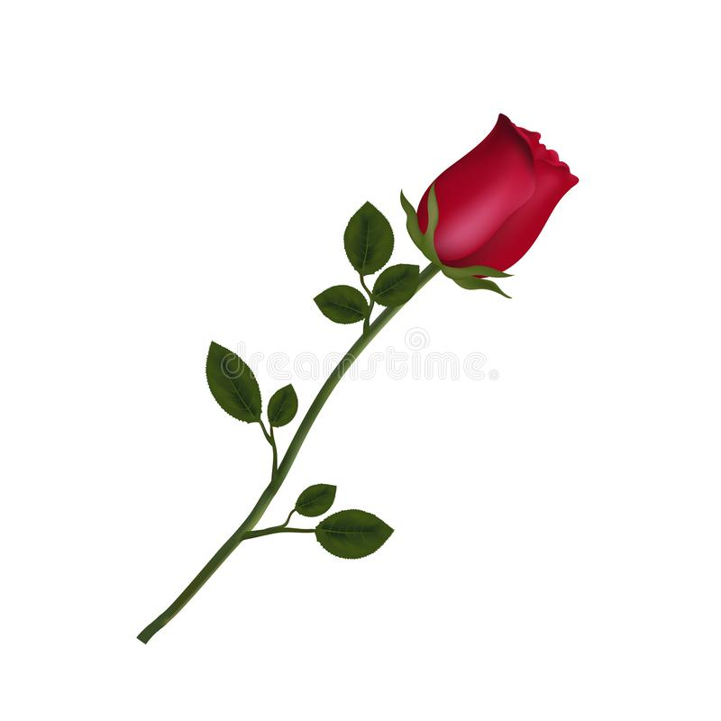 高度详述了在白色背景隔绝的红色玫瑰花 库存例证