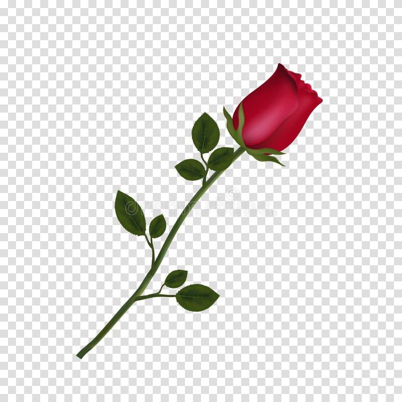 高度详述了在透明背景隔绝的红色玫瑰花 皇族释放例证