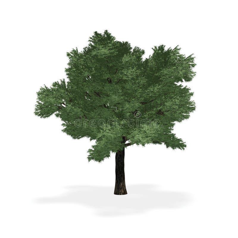 Download 高度详述的结构树 库存例证. 插画 包括有 唯一, 常青树, 背包, 本质, 树干, 绿色, 回报, 工厂 - 15692926