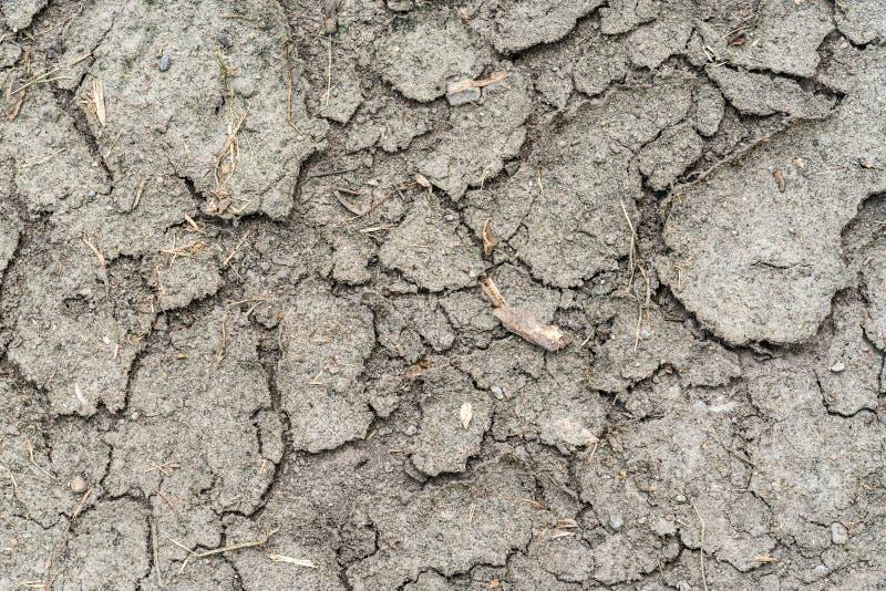 高明的旱田 免版税库存照片