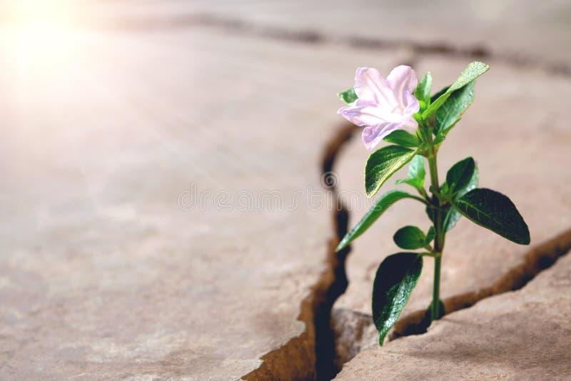 高明的生长概念的植物地板 库存图片