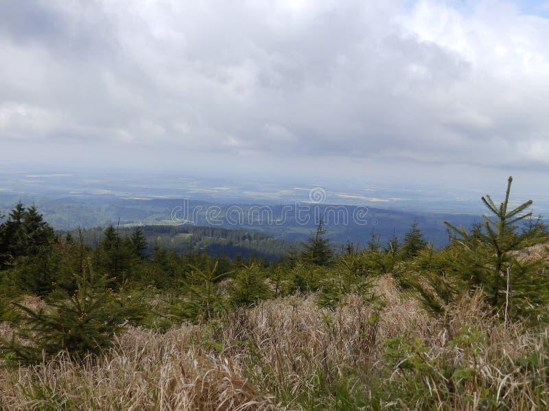 高树木丛生的小山 库存照片