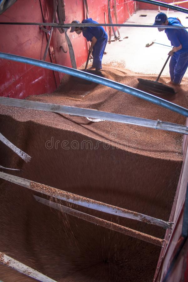高梁由从一辆卡车的一个民工倾销到筒仓 库存图片