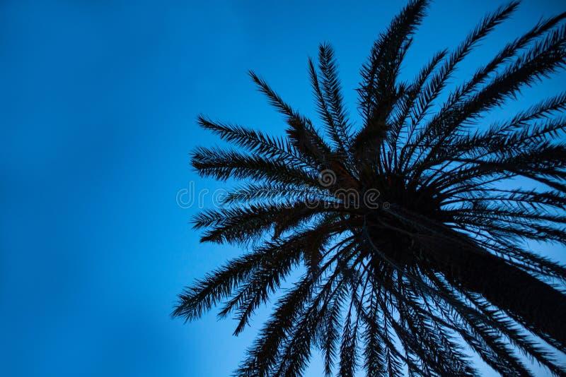 高棕榈树向上射击在天空蔚蓝下的 闪烁在树干附近的微小的LED光 缆绳导线垂悬的低落 库存照片