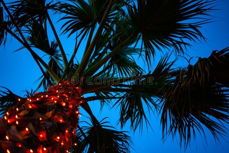 高棕榈树向上射击在天空蔚蓝下的 闪烁在树干附近的微小的LED光 缆绳导线垂悬的低落 库存图片