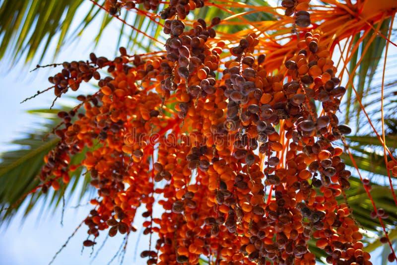 高棕榈树向上射击在天空蔚蓝下的 闪烁在树干附近的微小的LED光 缆绳导线垂悬的低落 免版税库存照片