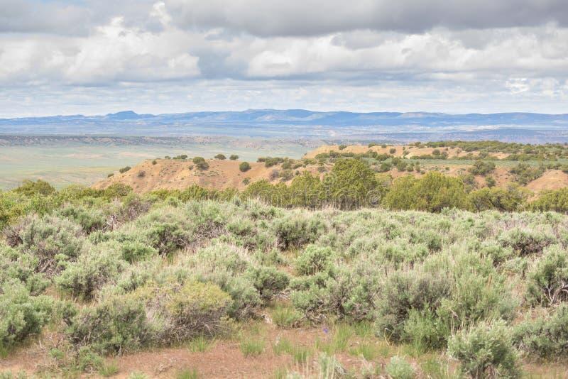 高沙漠风景春天在科罗拉多 免版税库存照片