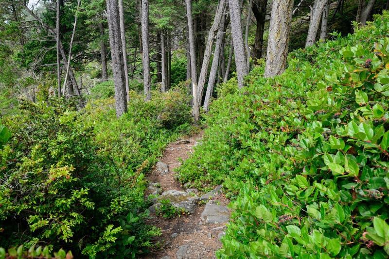 高涨森林 库存图片